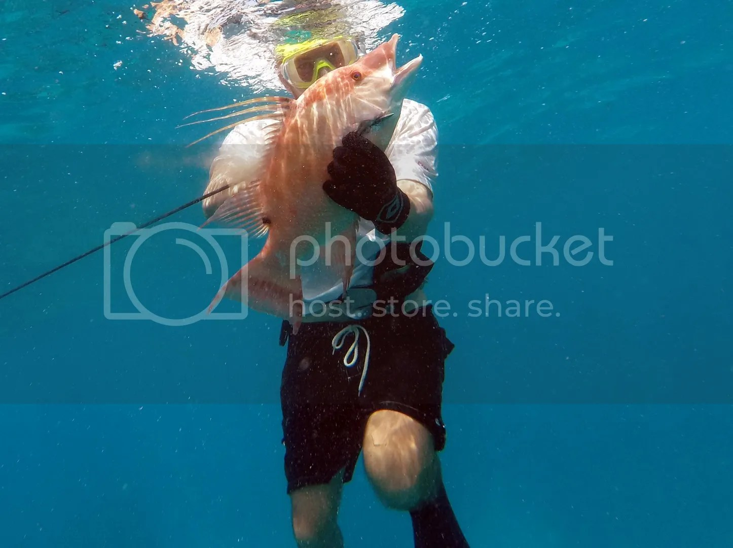 photo Tatehogfish.jpg