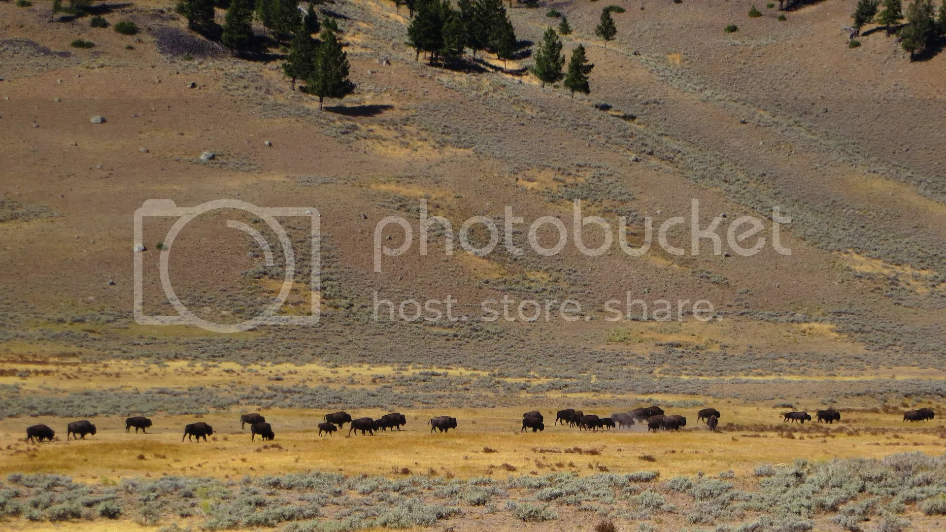 photo BisonHerd_tn.jpg