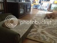 Warning-Costco dog bed