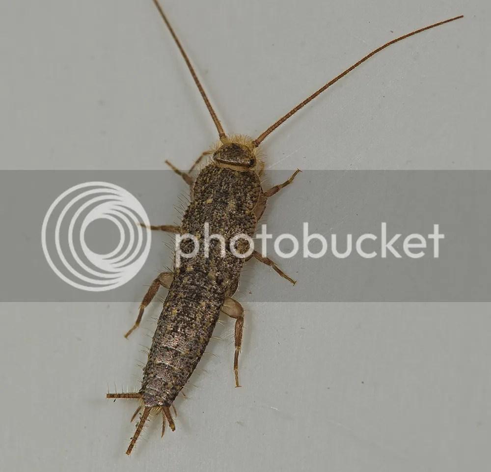 House Centipede  Photography Forum