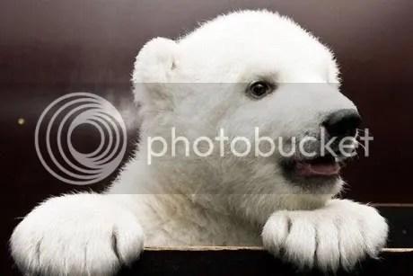 """""""Bayi Beruang Lucu"""""""