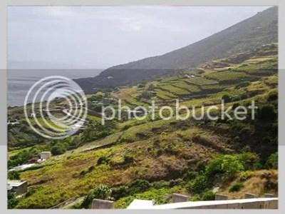 vigneti pantelleria,vigneti mueggen,salvatore ferrandes,passito ferrandes,passito pantelleria,vini sicilia,vini pantelleria,vini ferrandes,vini salvatore ferrandes