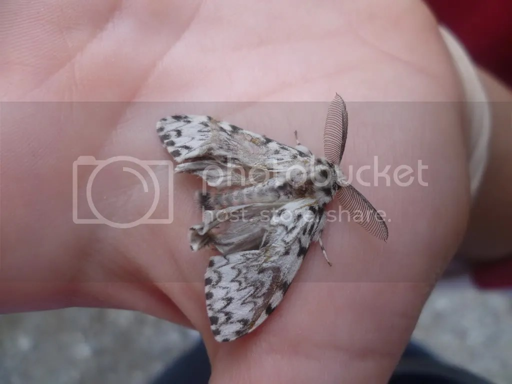 vedere da vicino una farfalla