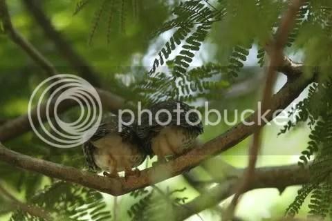 two owlts bk view lb 130511