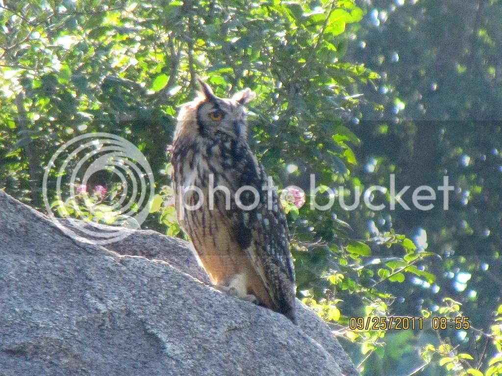 6 e owl trhli 250911