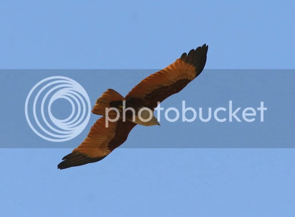L brhmny kite 291211 mnchnble
