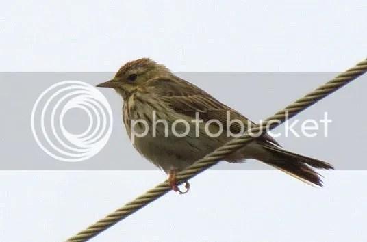indn bshlrm birds  bgz