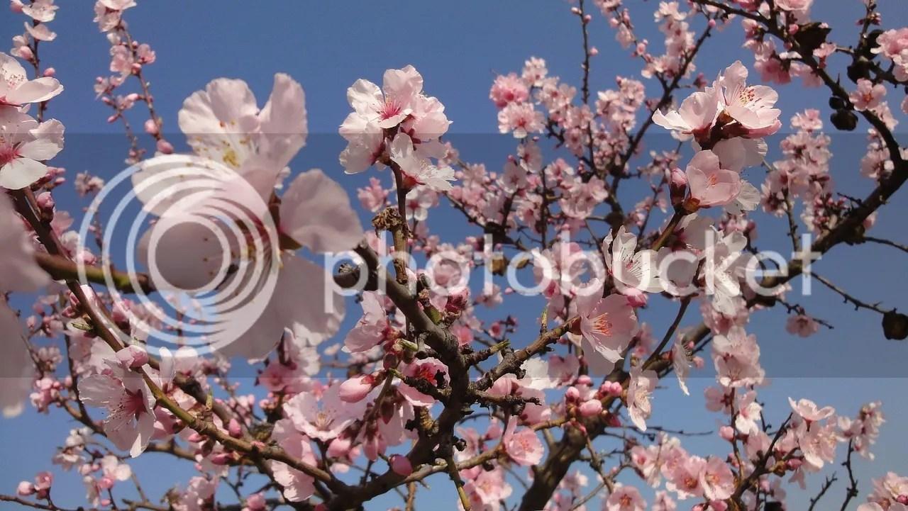 almendro, flor, relatando que es gerundio, relatando, las reflexiones de beita, beitavg, motivacion
