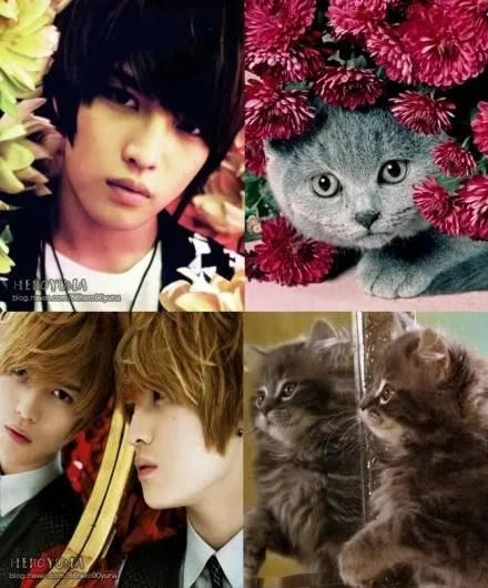 photo jj-and-kittiesteaser-1.jpg