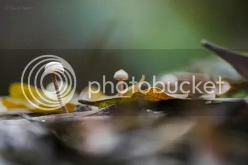 photo novembro_20122_zps557d1b76.jpg