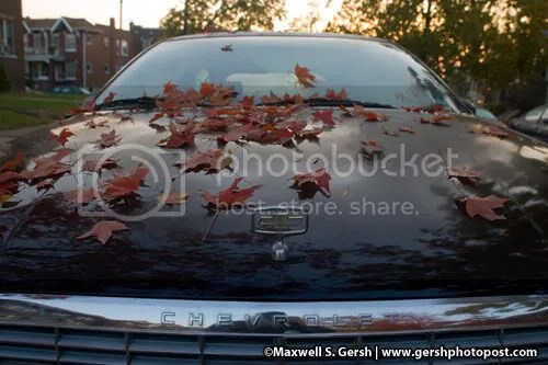 car with red leaves © Maxwell S. Gersh