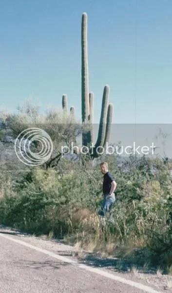 Saguaro-Kaktus bei Tucson