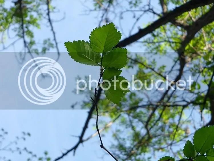 ramita de árbol
