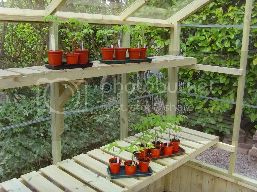swallow greenhouse slatted staging