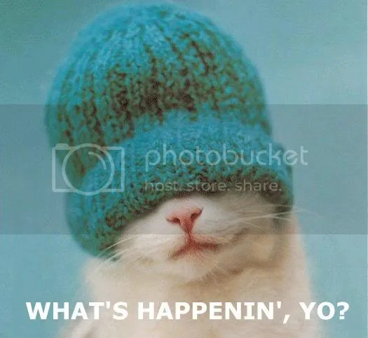 whats-happenin-cat