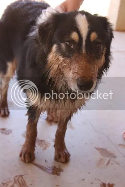 Mud Puppy! - 6 months