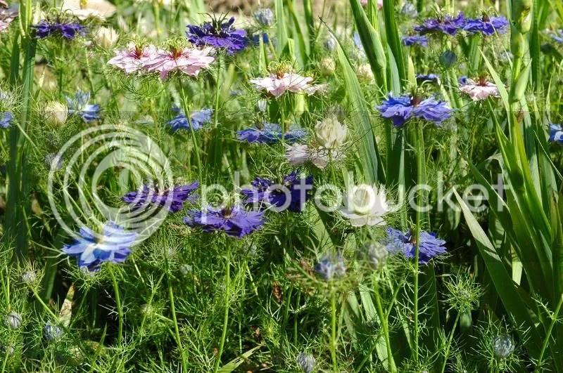 Lieves Garden