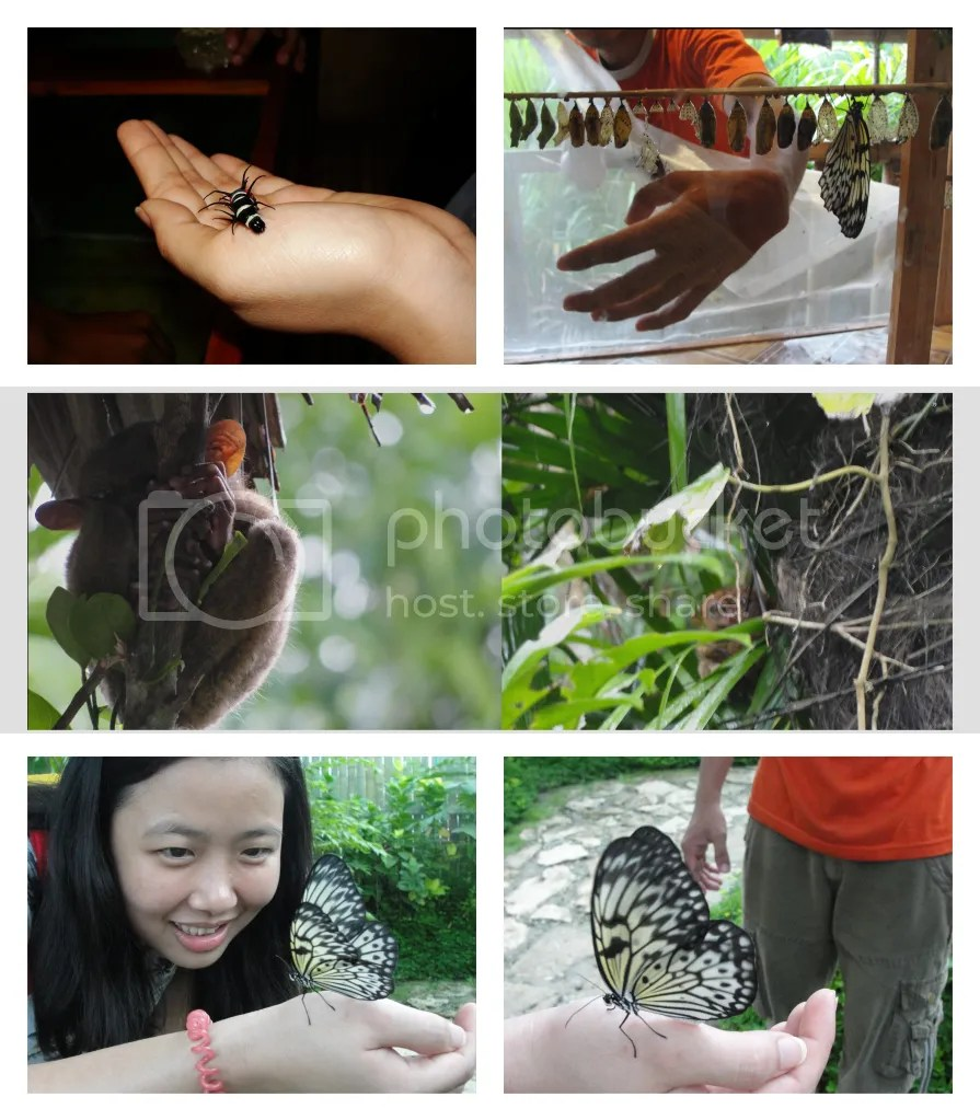 Butterfly Museum and Tarsier Sanctuary