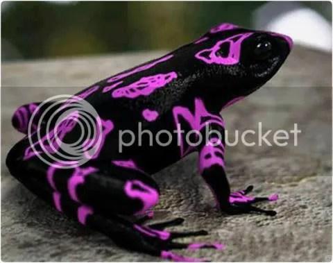 Purple Froggy