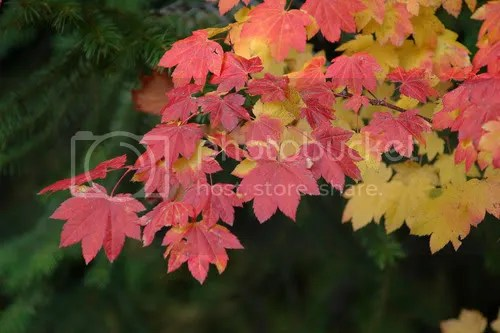 Fall leaves Pictures, Images and Photos