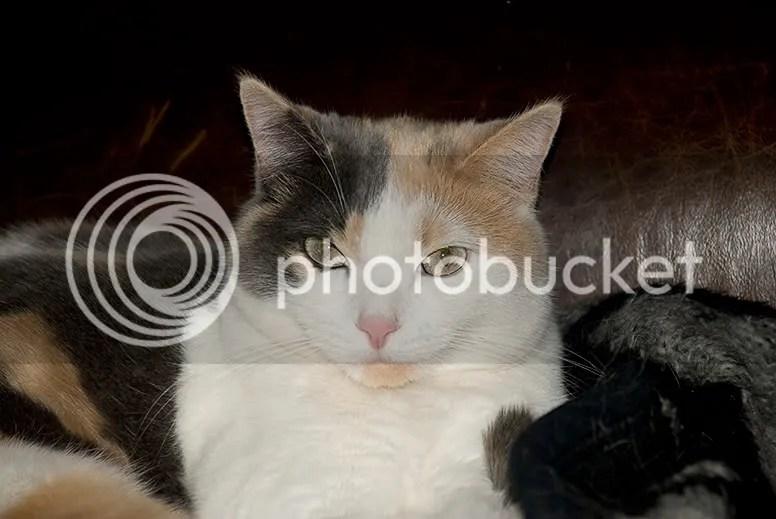 Murrie Cat