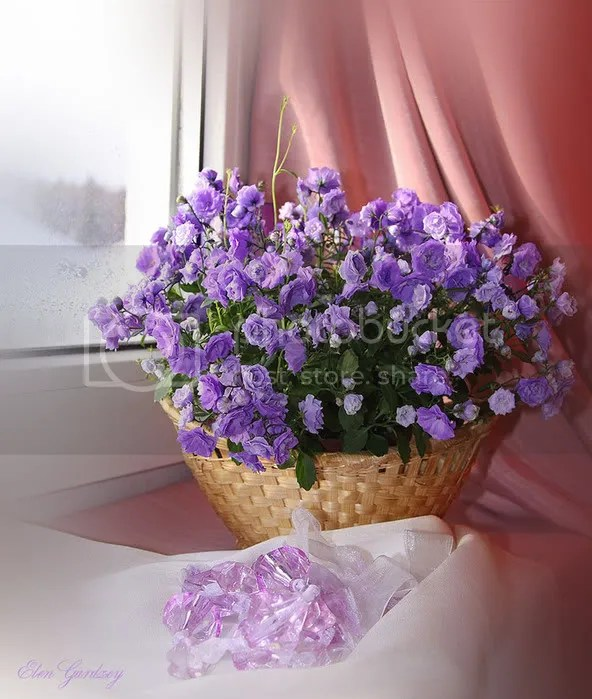 photo 68192869_1293027603_3459347_large.jpg