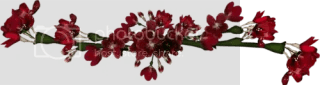 photo 0_7ed46_d968df03_L.png