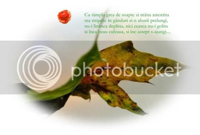 photo Fotor728.jpg