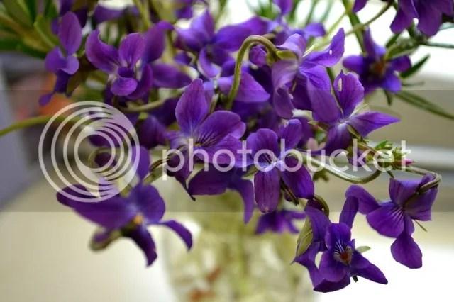 photo violets-2.jpg