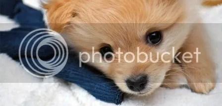 small dog breed list