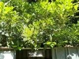 Garden-BB2