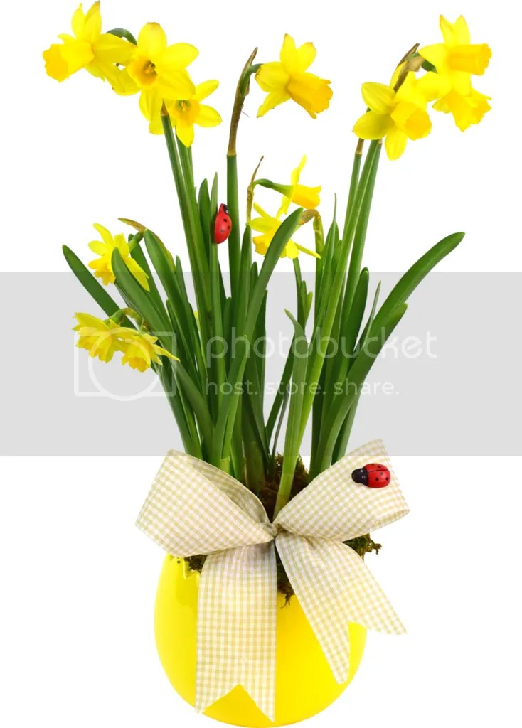 photo flori-mare-sarbatoare-31217_zpsv1mffiww.png