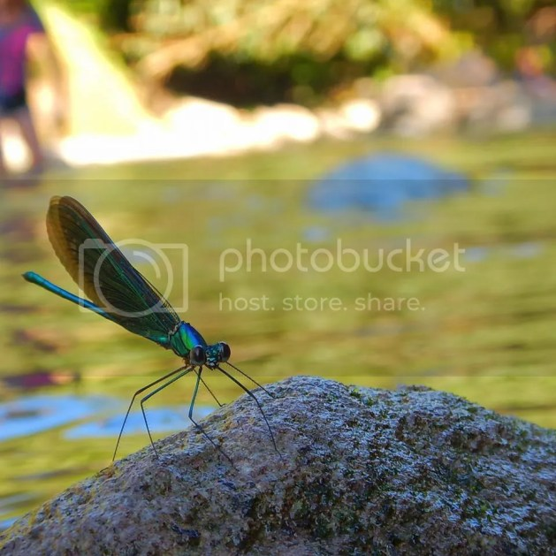 Dragonfly by the river
