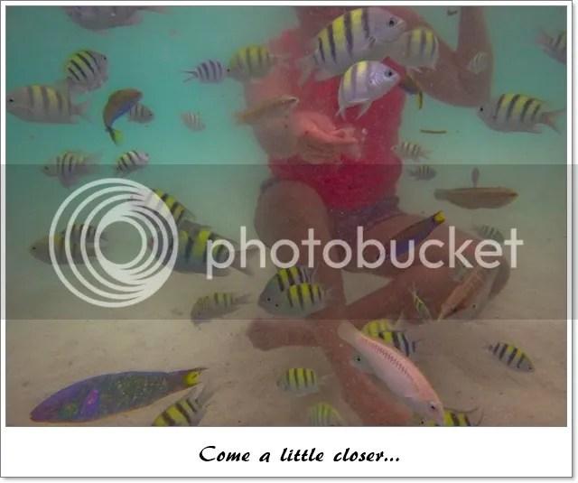 Feeding fish in Virgin Island