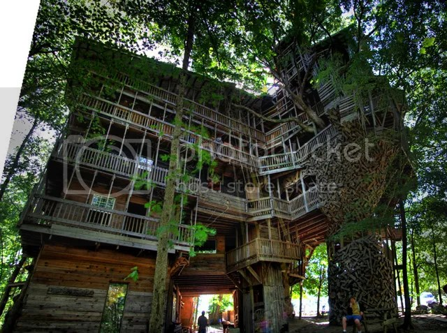 photo tree-1.jpg