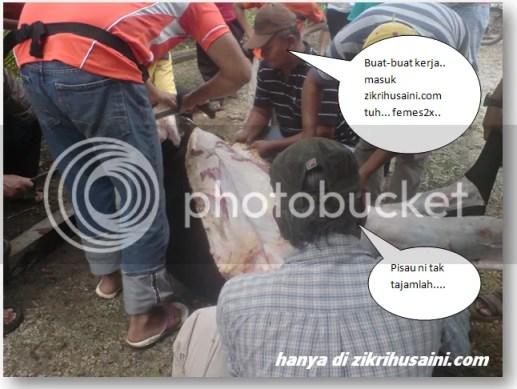 korban, lembu yang dibaut korban 2011, gambar lembu dilapah kulit dan daging, pembahagian daging korban 2011