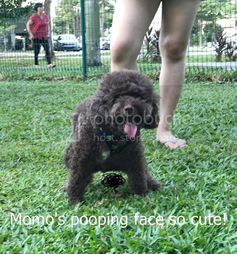 photo momo pooping_zpsiaqxe118.jpg