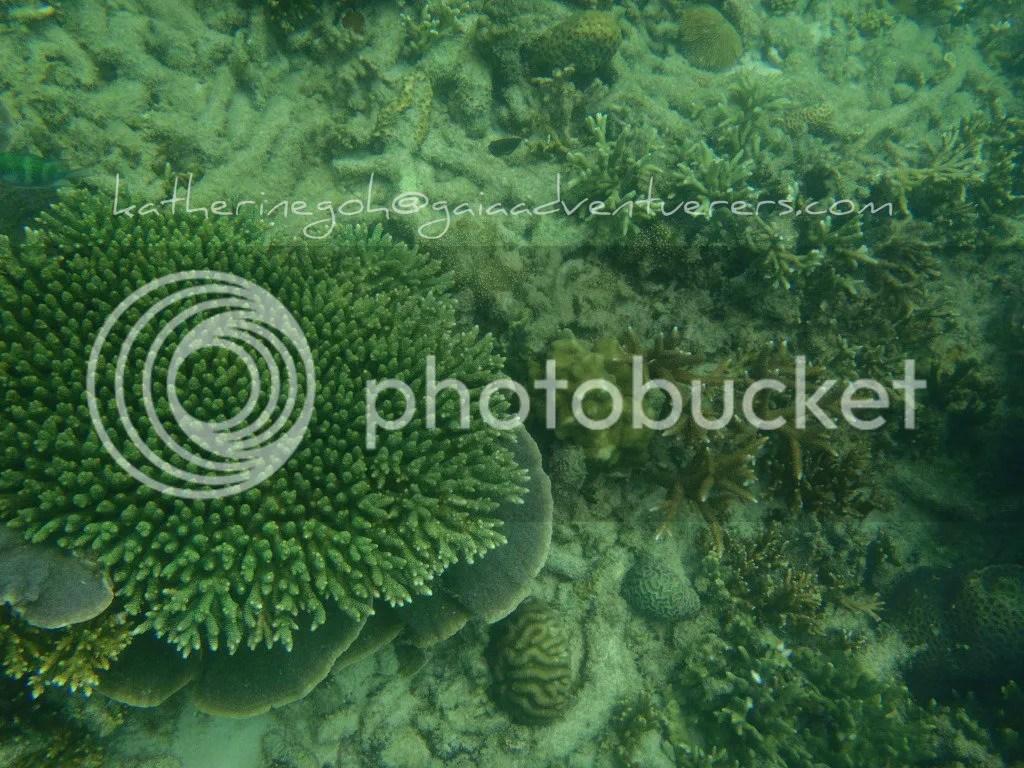 More more corals