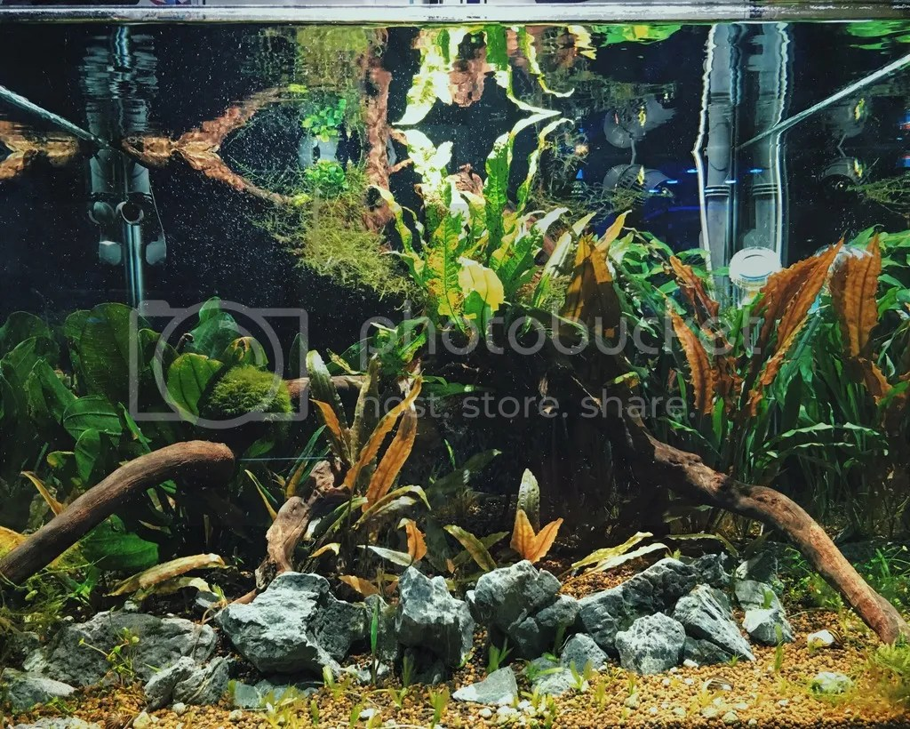 Planted Tank with driftwood rockscape.jpg