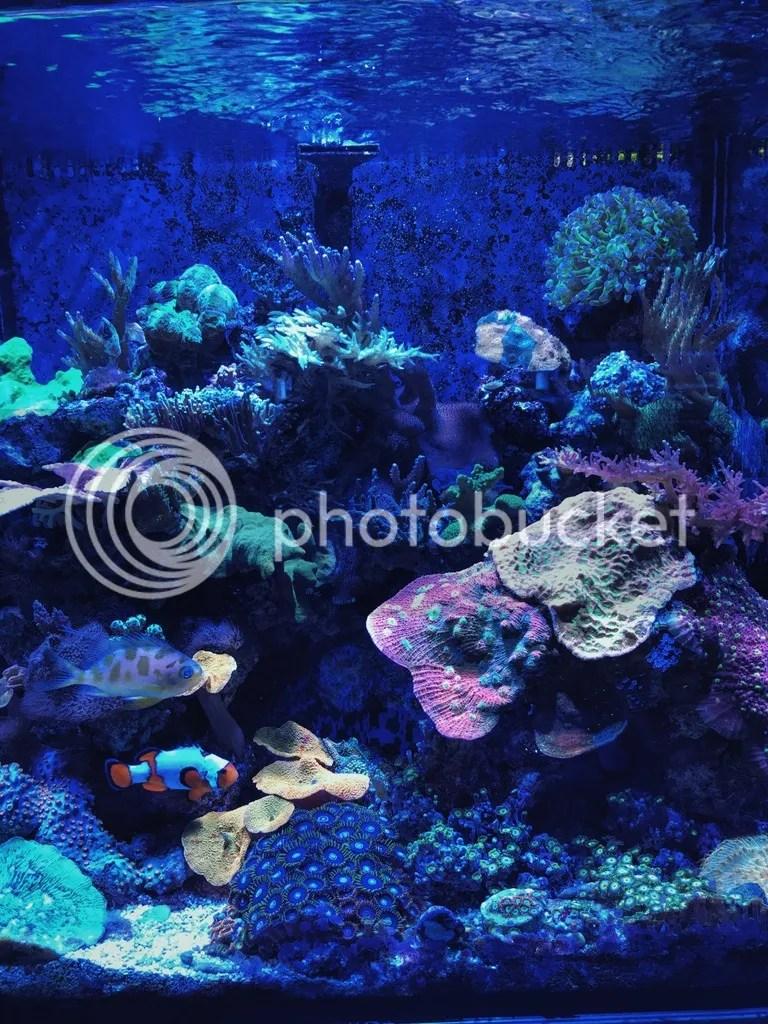 Nano Reef with clownfish Neptune Aquatics.jpg