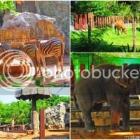 Bangkok, Thailand: Dusit Zoo