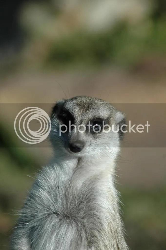 meerkat adventures south africa