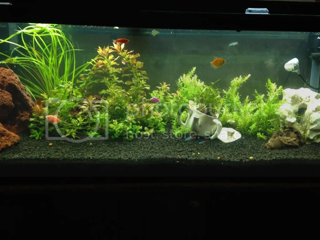 glofish lighting the planted