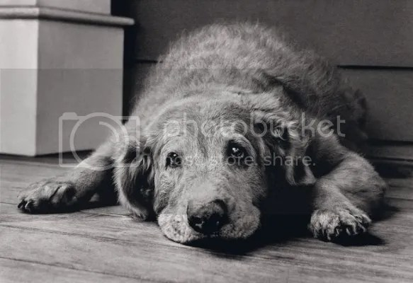 photo seniordog_zpsf3fd318d.png