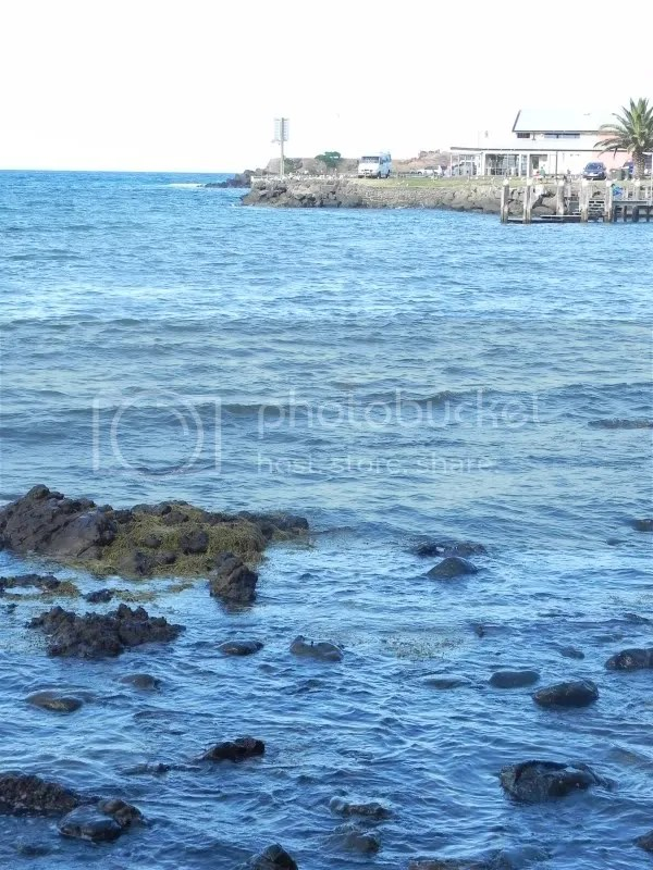 A view across Kiama harbour to a wharf - rocks and seaweed in foreground