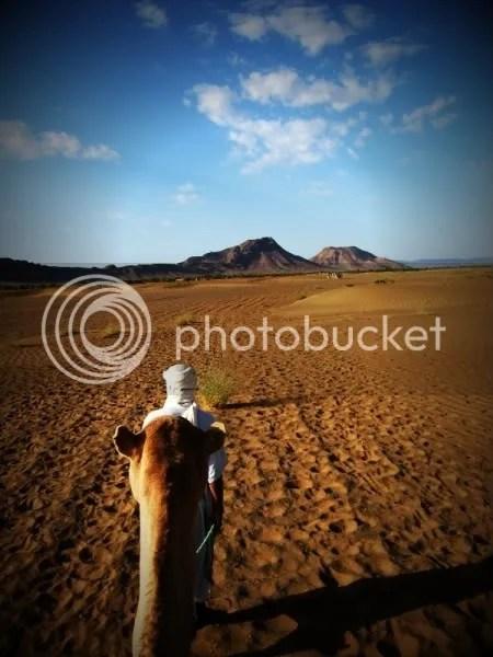 Berber Desert Camel
