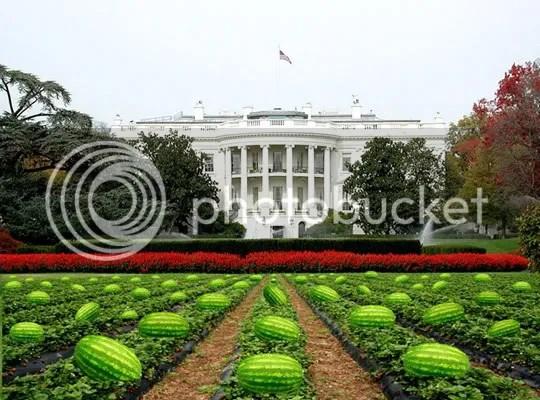Whitehouse Watermelon