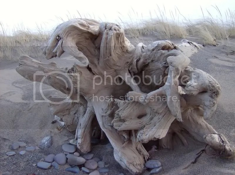 driftwood Pictures, Images and Photos
