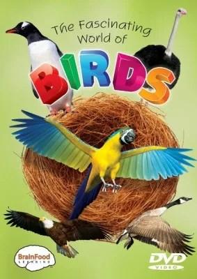 photo birds_front_500__461681322240558300400_zpsc2153c21.jpg