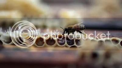 photo beehive_zpsb280da16.jpg
